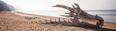 dragon playa portdada