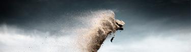 criaturas de arena portada