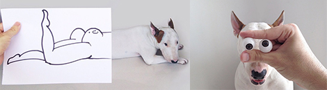 bull terrier portada ilustraciones