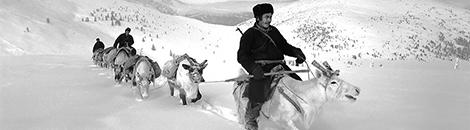 portada renos pueblo de mongolia
