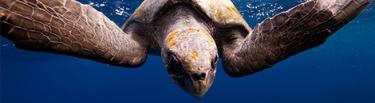 portada criaturas de mar oceano sol