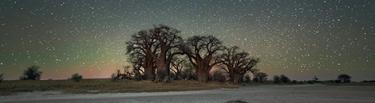 portada astro fotografia arboles bajo luz luna estrellas