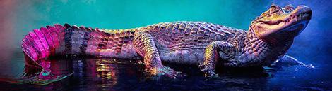 portada caimanes y cocodrilos llenos de color