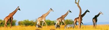 VSCO animales fana naturaleza presets filtros preajustes edicion limitada